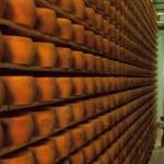 Nel cuore della valle del Parmigiano Reggiano: visite a caseifici e degustazioni