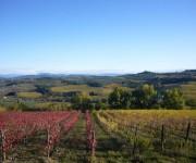 Paesaggi meravigliosi di vigne